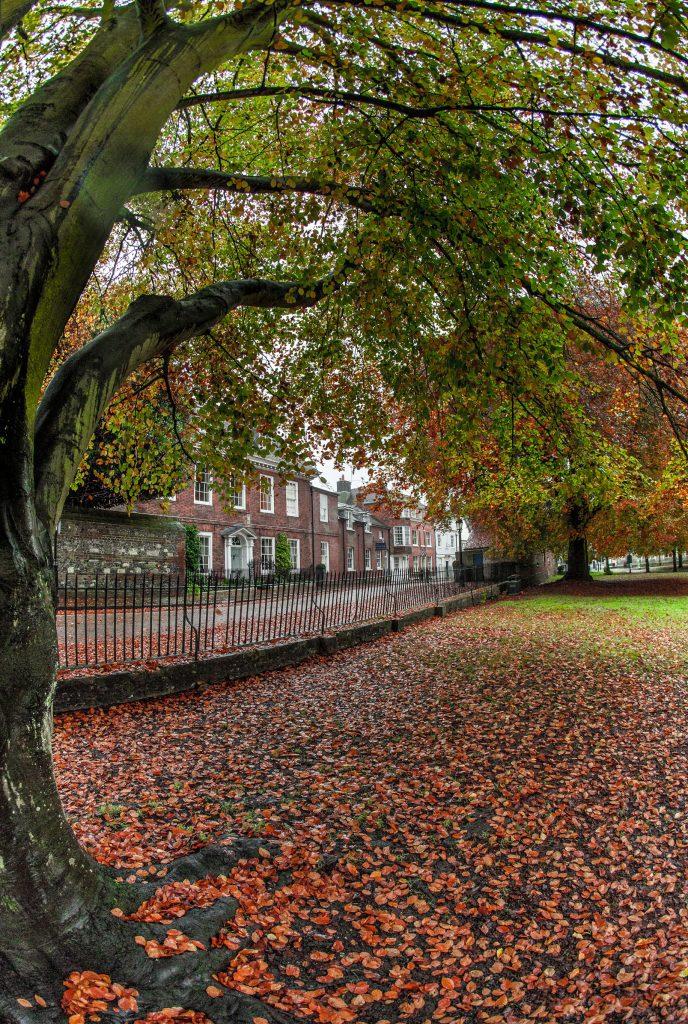 Autumn leafs - Javaid Akhtar