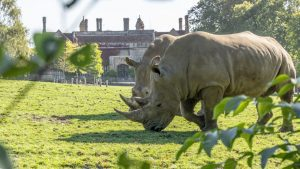 Rhino in front of Marwell Hall
