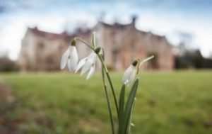 Snowdrop in front of Chawton House