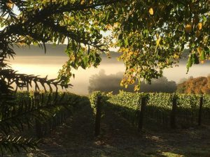 Hambledon Vneyard in autumn
