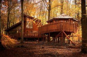Cabin at Blackwood Forest
