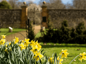 Daffodils at Chawton House