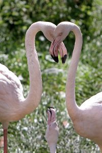 Two flamingos at Marwell Zoo