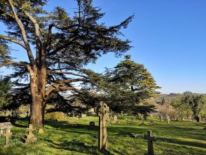 the cemetery and trees with views of Winchester behind