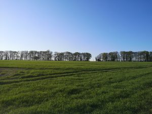 Green fields with trees in the background at Barton Meadows