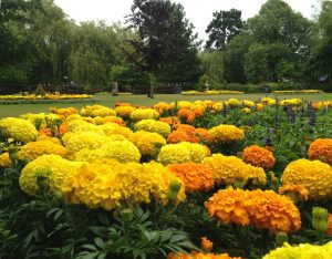 yellow flowers in Abbey Gardens