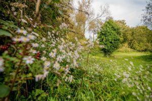 Flowers and trees at Winnall Moor