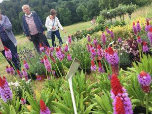 Plants in bloom in garden